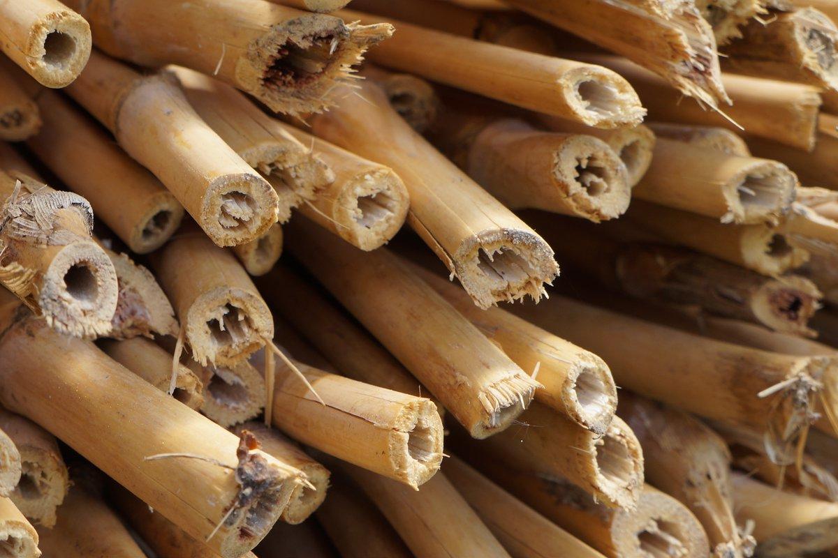 Parquet Bambou